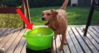 Hij plaatst zijn bal in deze speciale bak... wat hij dan doet, is hilarisch!