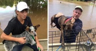 Un padre e un figlio salvano insieme oltre 40 cani abbandonati durante un'alluvione