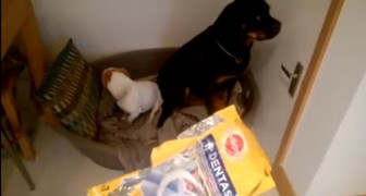 Who ate all the biscuits? --- the complicity of these two will just crack you up!