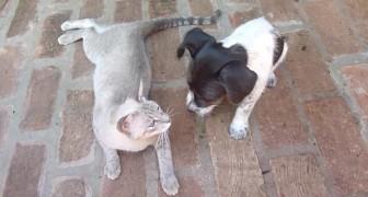 Un cagnolino orfano e una gatta neo-mamma: ciò che fanno supera le leggi della natura