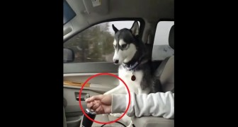His owner is caressing him --- look at how this dog responds!