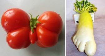 Uit De Kluiten Gewassen Groente En Fruit, Wie Van Jullie Ziet Er Het Apartst Uit?