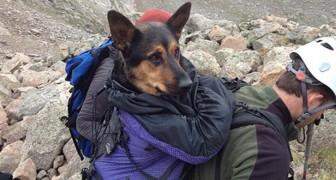 Haar eigenaar liet haar op een berg achter, maar na acht dagen doodstrijd ziet iemand haar