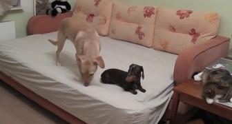 I padroni escono di casa... ecco cosa fanno cani e gatti in loro assenza