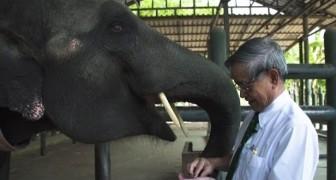 Ze beweegt zich als een gewone olifant, maar kijk maar eens goed naar haar voorpoot...