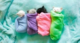 4 kleine kittens doen samen een middagdutje, hun schattige kopjes zullen zorgen dat je op slag verliefd wordt!