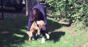 Het werd gered van het slachten en begint een nieuw leven met zijn eerste wandeling op het gras