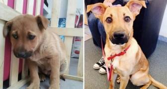 15 dieren voor en na hun adoptie: zie hier het effect van liefde