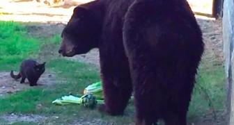 En katt har kommit innanför stängslet av en björn: hans reaktion lämnar besökarna utan ord