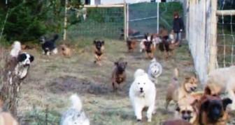 45 cani salvati entrano per la prima volta nella loro nuova casa: un'esplosione di gioia!