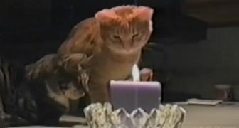 I due gatti fissano la candela, ma tenete gli occhi su quello a destra...