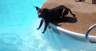 Deze pitbull komt voor de eerste keer in aanraking met water: de manier waarop hij het water benadert is... bijzonder!