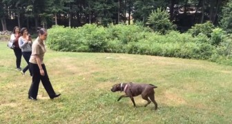 A dog sees its owner after one year --- see their thrilling reunion!