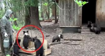 I volontari di un rifugio nutrono gli orsi orfani: ecco cosa accade ogni giorno!