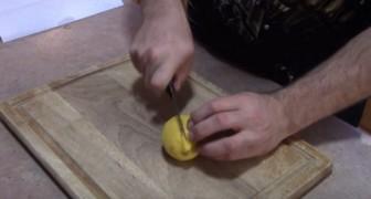 So kann man einen Zitronenbaum aus einer Frucht entstehen lassen