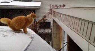 Gato, no es una buena idea saltar sobre la nieve...