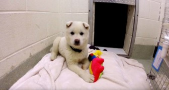 Destined to become dog meat --- now he plays happily with toys!