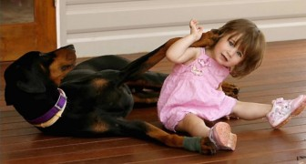 Find out why this Doberman attacked this little girl ...