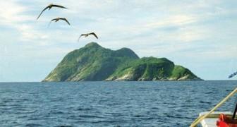 Ecco a voi l'isola dei serpenti: un affascinante paradiso... dal quale è meglio stare alla larga
