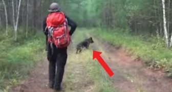 A little girl gets lost in the woods with her dog that protects her for 12 days and then helps the rescuers to find her