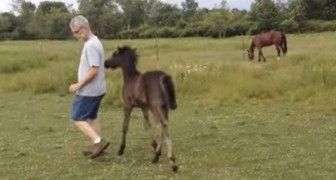 A man stops caressing a colt --- he will pay dearly for this error!