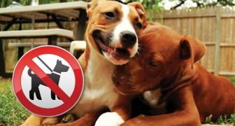 I padroni di pit bull vengono discriminati? L'esperienza di questa donna ci dà una risposta