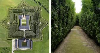 Le plus grand labyrinthe du monde? Il se trouve en Italie et compte plus de 200.000 plantes.