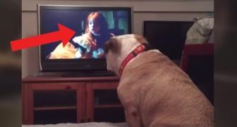 Il bulldog sta guardando un film horror alla TV: quando arriva la scena clou la reazione è sorprendente!