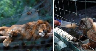 Venezolaanse Voedselcrisis: wanhopige inwoners eten dieren in dierentuin op
