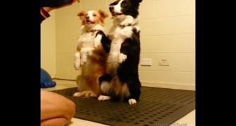 I due cani sono pronti a fare l'esercizio: ecco cosa hanno imparato!