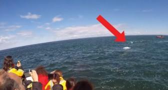 Een boot vol toeristen maakt een tochtje over het water: dan volgt er een spektakel dat hen de adem beneemt!