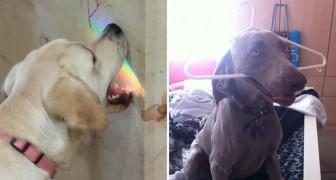 19 immagini di cani che strapperebbero un sorriso a chiunque