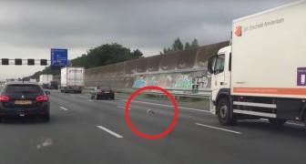 Mentre viaggia in autostrada nota un piccione tra le auto: non crederete a ciò che sta facendo!