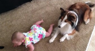 A baby girl cannot crawl --- a pet dog gives her lessons!