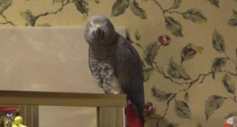 Il pappagallo chiede insistentemente il suo piatto preferito: come fare a non accontentarlo?