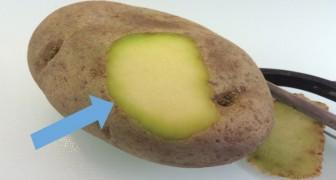 Manger des pommes de terre vertes ou avec les germes , c'est vraiment dangereux pour la santé?