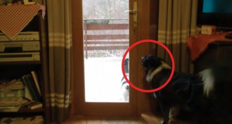 Hij vraagt de hond om de kat in huis te laten... hij doet dit op ONBERISPELIJKE wijze!