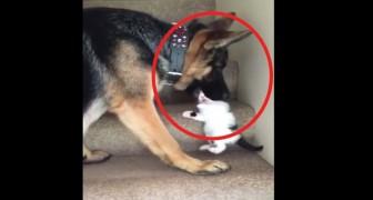 Il gattino non riesce a salire le scale: il modo in cui viene aiutato è dolcissimo