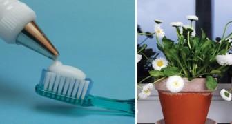 Un ingrediente naturale al posto dei prodotti chimici: scoprite 18 usi dell'acqua ossigenata