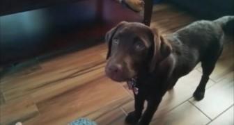 Ecco a voi il cane più pigro del mondo: non è adorabile?