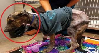 I veterinari la davano per spacciata: dopo due mesi il cambiamento è MIRACOLOSO