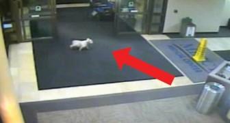 Su patrona estaba internada: lo que logra hacer este perro es inexplicable...y conmovedor