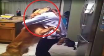 Slechts één beweging van zijn baasje is genoeg om een innige omhelzing van deze hond uit te lokken!