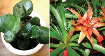 Inquinamento degli ambienti chiusi: ecco le 5 piante d'appartamento che lo riducono