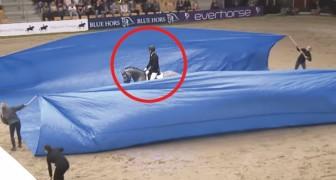 Hästen kommer in, och efter några sekunder så kommer domarna att förbli mållösa .. WOW!