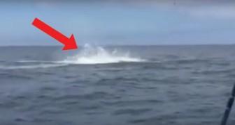 Deze visser heeft een heleboel haaien waargenomen, maar kijk wat er kort na de vangst gebeurt...