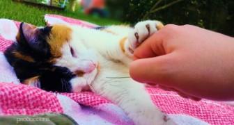 Deze man plaagt de kat met een grassprietje... de reactie van de kat is schattig!