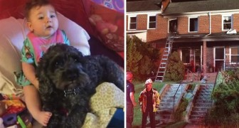 Una casa viene avvolta dalle fiamme: ciò che fa il cane è da vero eroe