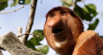 Moches et oubliés de tous: voici les animaux en danger d'extinction que personne ne connait