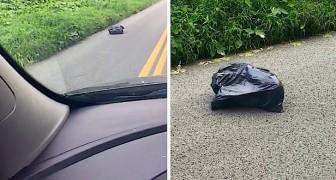 Notam um saco que se move no asfalto: quando o abrem fazem uma descoberta horrível!